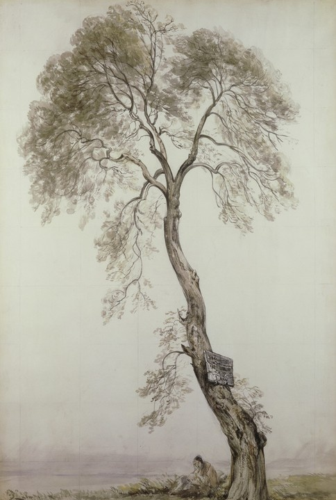 An Ash Tree by John Constable  Discover the coolest shows in New York at www.artexperience...