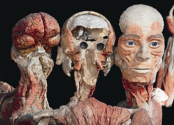 Discover Magazine: The latest in science and technology news, blogs and articles - Gross Anatomy