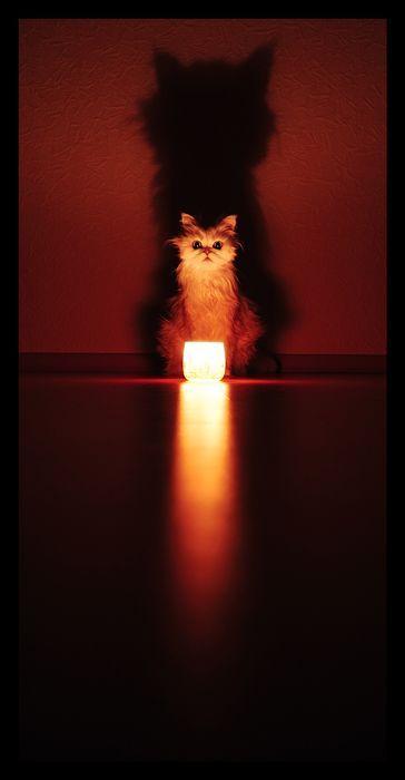 gato sombra
