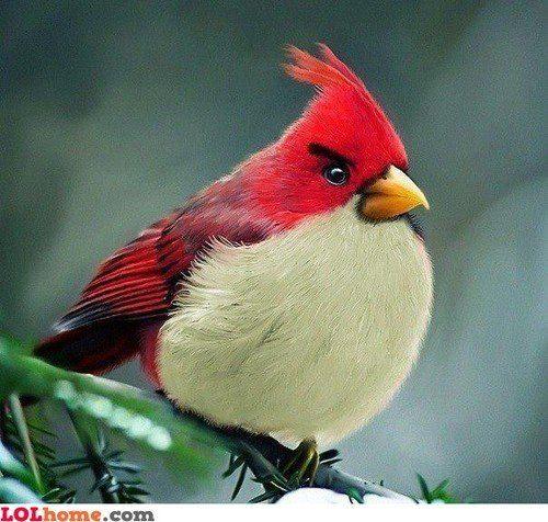 The original angry bird?