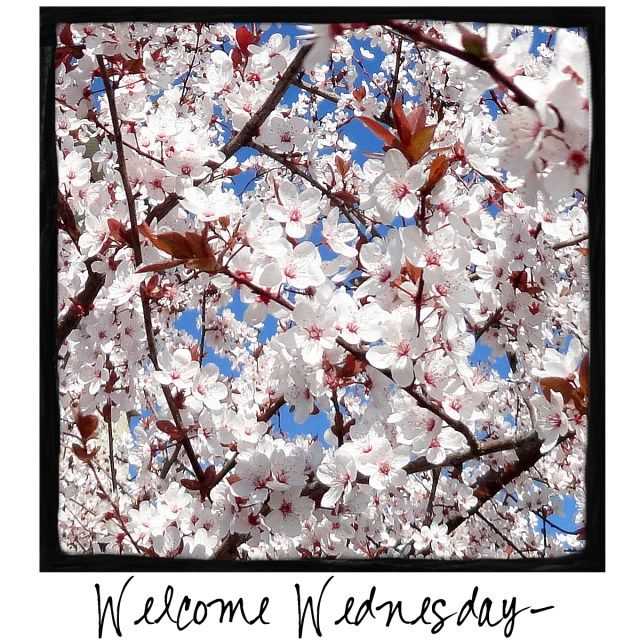 Welcome Wednesday! Spring has sprung! Come by and visit A Warm Hello!