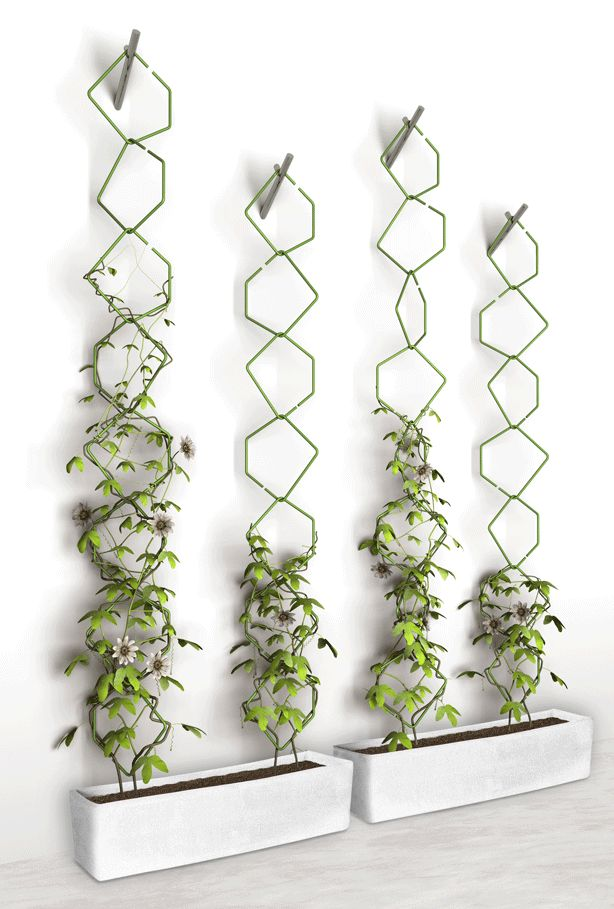Frédéric Malphettes Trellis Vertical Garden. Can't buy it but can copy it. Add rings (interesting rhombus) as needed.