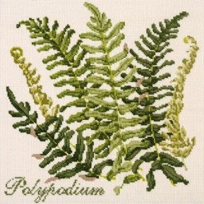Polypodium from The Shade Garden collection