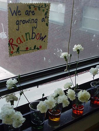 Carnation Rainbow - this site has lots of good ideas to help kids learn how plants grow.