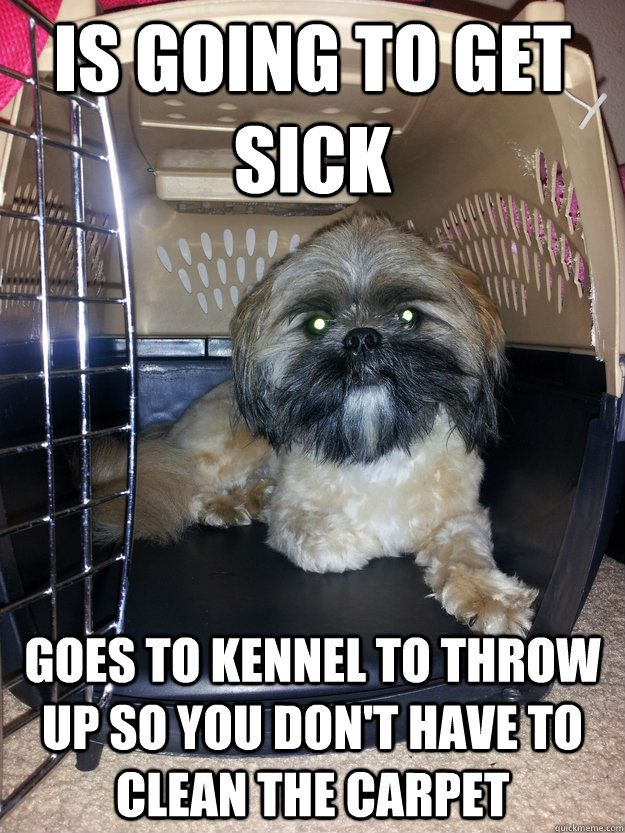 Funny clean dog memes - photo#47
