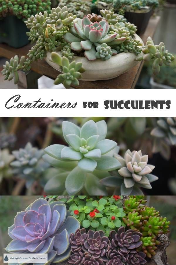 Containers For Succulents Rustic Classic Rugged Funky Or