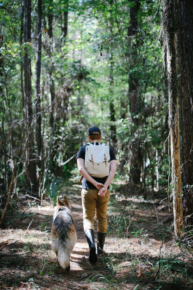Man's best friend out for a woodland stroll.