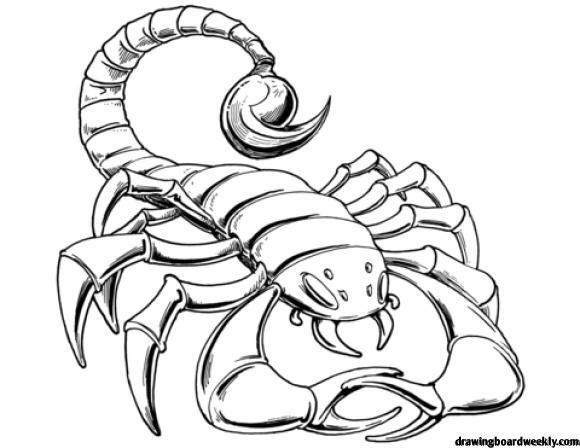 Scorpion Coloring Page The Scorpion Also Known As A Scorpion