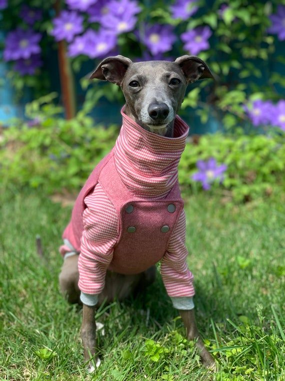Italian Greyhound NOOD SuperLounge: Overall 2 Piece Set ...