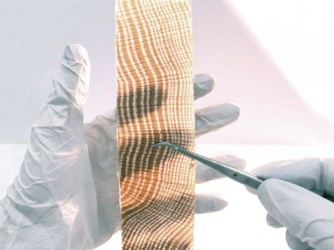 Le remplacement de la lignine du bois par un monomère cristallin le rend translucide
