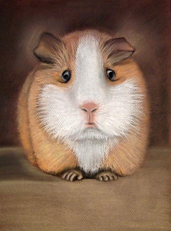 guinea pig by ~lomaxart on deviantART