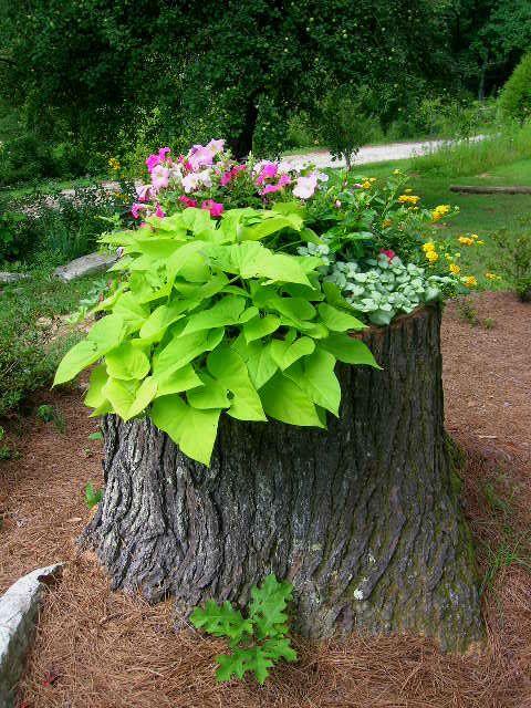 Яркие клумбы из пней или как украсить пень в саду — law.biz.ua