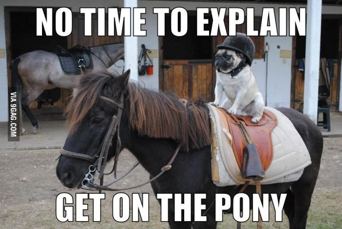 get on the pony