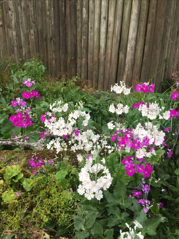 阿里山上遍地開著可愛美麗的花兒