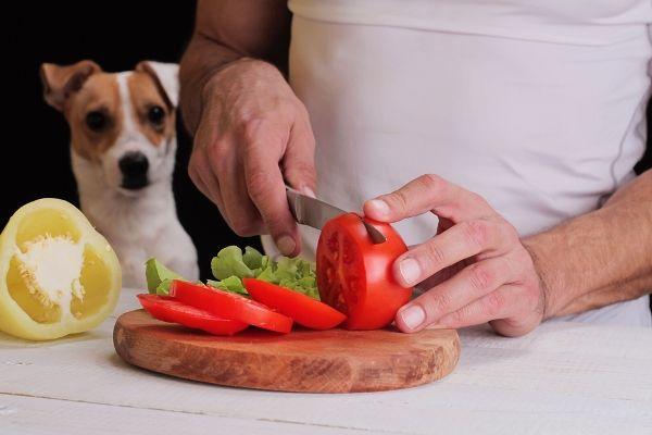 Come e dove acquistare cibo vegano e vegetariano per animali