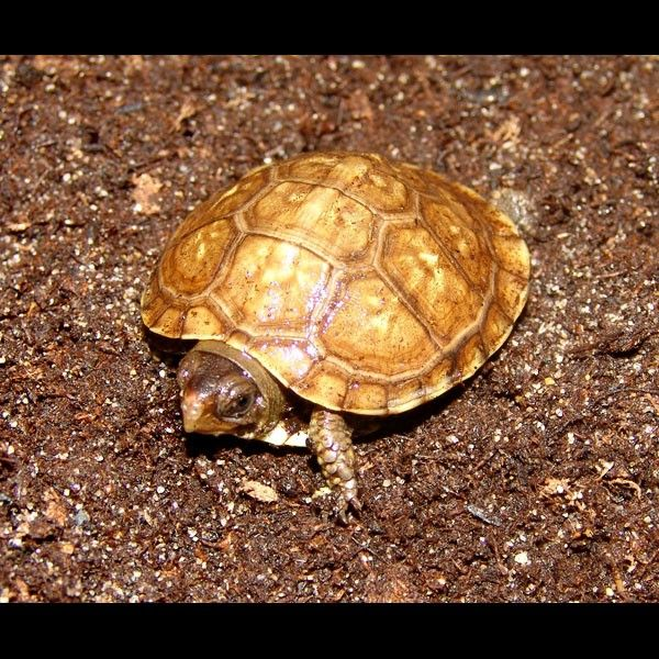 1000 Images About Turtle Love On Pinterest