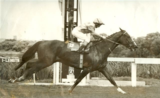 SWEET CHESTNUT ch m 1976 FLOWER POWER – NONE SWEETER Won: Cape Fillies Guineas (Gr.1) 1600m Won: Cape Flying Championship (Gr.1) 1000m Won: Sceptre Stakes (Gr.3) 1200m Won: Southern Cross Stakes (Gr.3) 1000m Won: Diana Stakes (L) 1400m Won: Breeders Stakes (L) 1200m