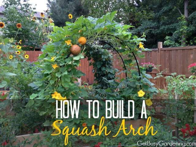 How To Build A Squash Arch//Add beauty to your vegetable garden with this gorgeous squash arch. An easy, inexpensive DIY project.