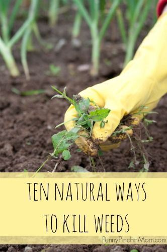 If you want to get rid of the weeds in your garden without bringing dangerous chemicals to the party, then you'll definitely want to check out these 10 natural ways to kill weeds.