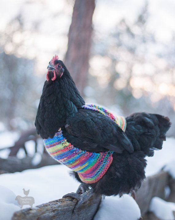 Would you #knit your chicken a sweater?