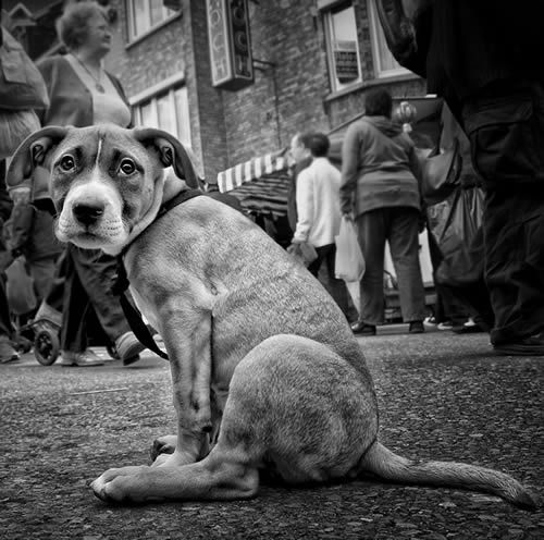 Street photography poor doggy