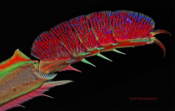 If you've ever wondered how a diving beetle swims through the water or manages to rest just on the surface, the answer is in part because its foot is infinitely more complicated than your own. As seen above, this microscopic image of a male Acilius sulcatus (diving beetle) by photographer Igor Siwan