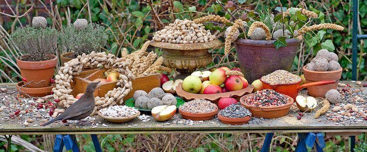 Biedt vogels een mooi menu aan natuurlijk voedsel.  We hebben alle tips voor u op een rij gezet.