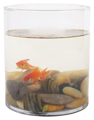 It's possible to keep a goldfish in a bowl, but they shouldn't be kept in one. A bowl is too damned small for a goldfish. If you want you goldfish to be happy, give the poor thing a proper tank, and not plop him into a tiny tank for 'decoration'.