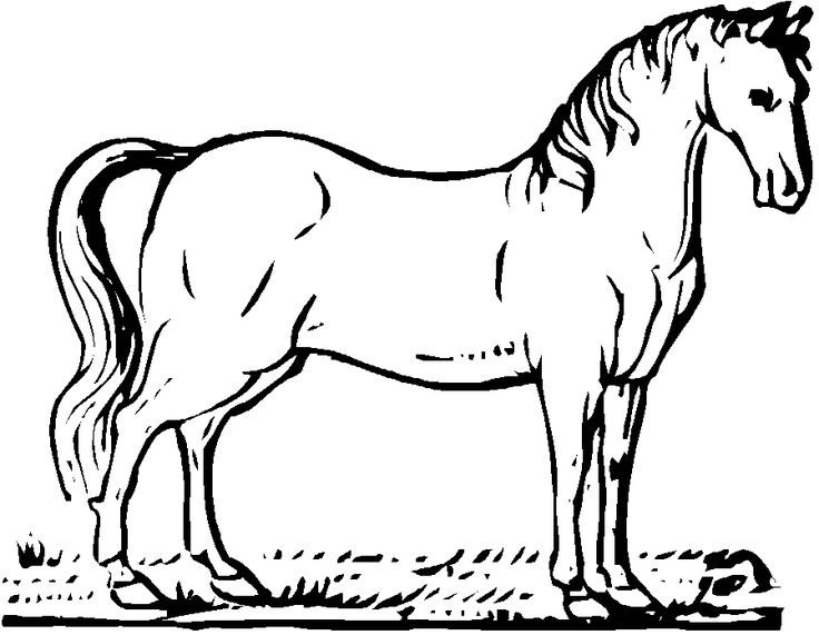 19 best Horse Coloring Pages images on Pinterest Animal