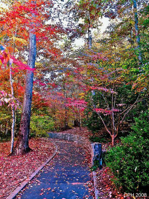 Athens GA, State of GA Botanical Garden - walkway near Shade Garden by Houckster, via Flickr