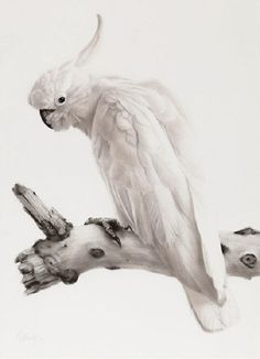 Hyperrealistic silverpoint art by British artist Gordon Hanley ...