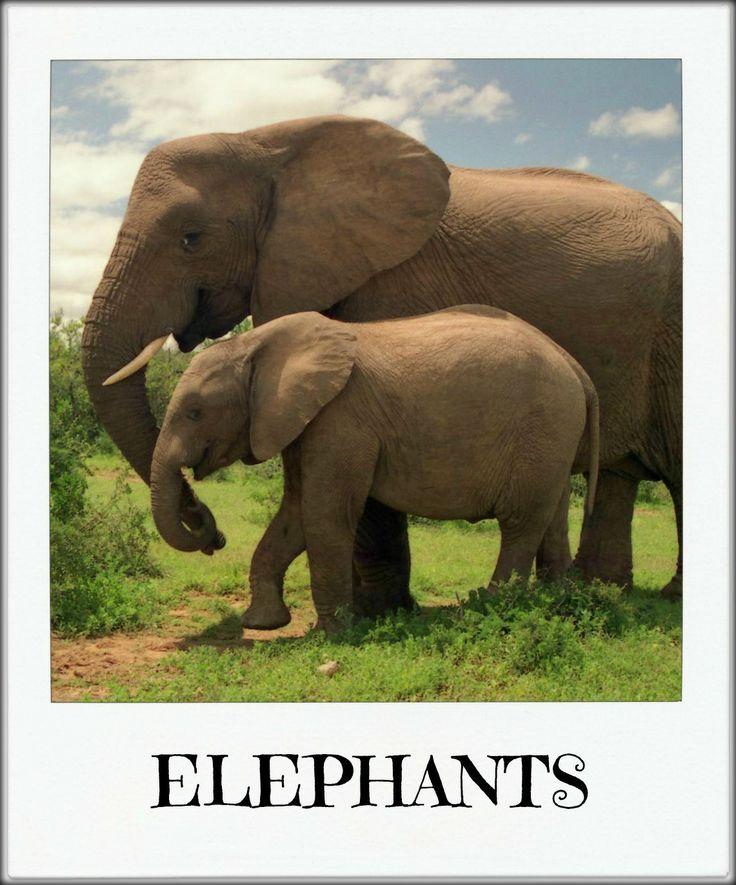 Monkey and Me we went to see ELEPHANTS!