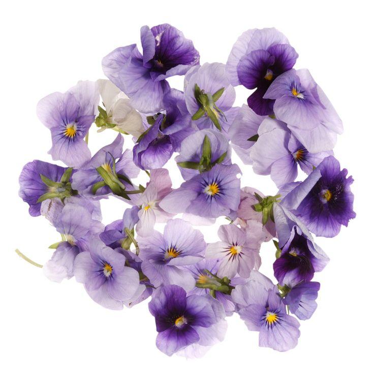 Buy Edible Viola Flowers Online UK