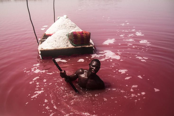 Seydou is a worker at Lac Rose, the largest salt flat in Senegal and one of the most important in the region. Hundreds of people here gain their livelihoods from the extraction of salt. The salinity of the water is what gives the lake its particular and incredible pink colour. A type of pink algae, Dunaliella Salina, thrives in its waters. Men extract the salt from the lake and women carry it to the mounds, which accumulate as white dunes under a scorching sun. The salt workers apply…