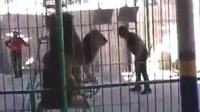Um domador morreu após ser atacado por um leão durante uma apresentação circense, em Alexandria, no Egito. Islam Shaheen, de 35 anos