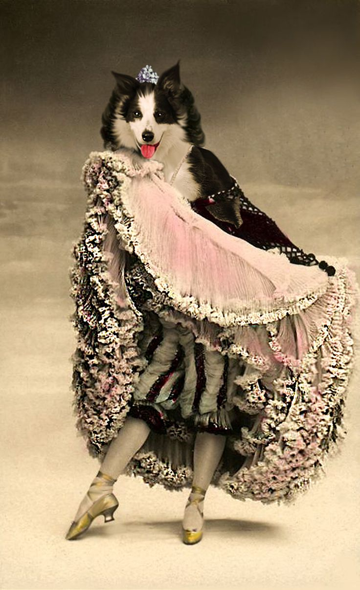 """Bella au Moulin Rouge... One of her ancestors was the famous cancan dancer called """"La Bellue""""... (Old postcard found in Pinterest. There was a dancer in reality, known by her nickname """"La Goulue"""", but it's not really her!) Anthropomorphic dog digital art."""