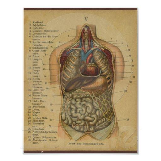 Anatomy Deutsch