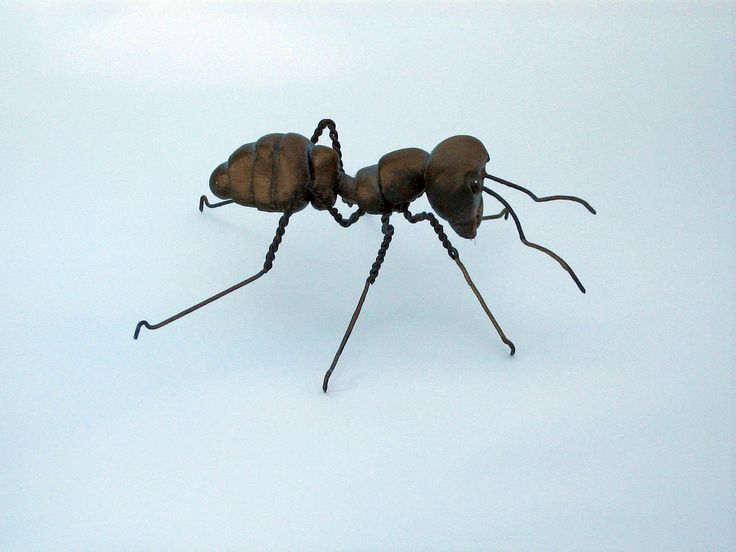 Ant | Flickr - Photo Sharing!