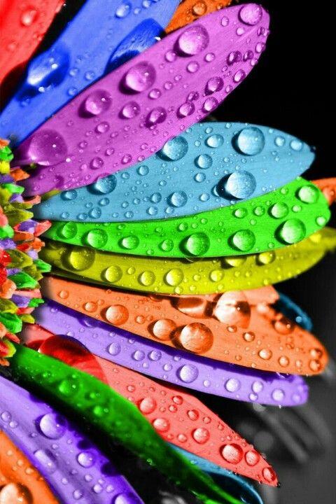 color | nature | flowers | color inspiration | beautiful