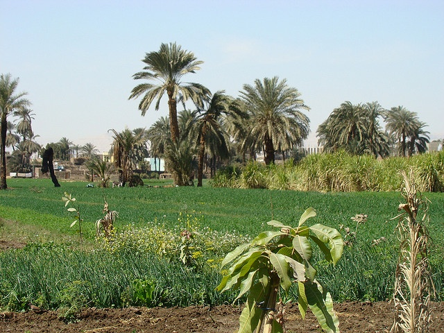 Verdant fields near the Nile by Gauis Caecilius, via Flickr