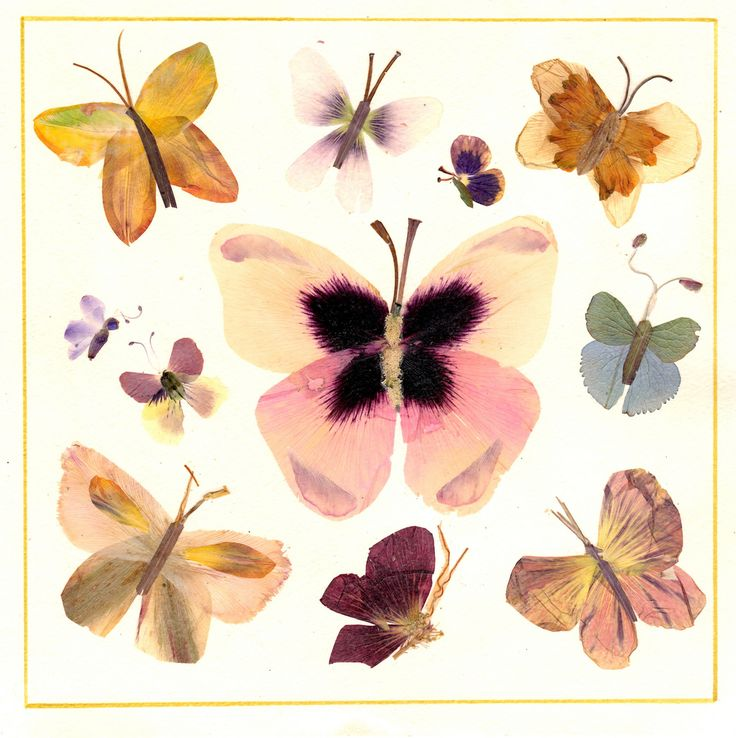 Коллекция бабочек (в центре - ярко-розовый пион) (solodstudio) Tags: flowers pressed herbarium цветы oshibana бабочки гербарий прессованные цветосложение осибана