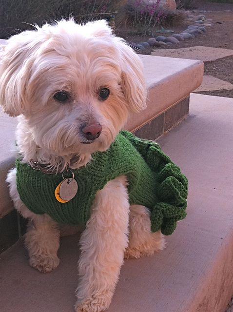 106 Best Dog Sweaters Images On Pinterest Dog Sweaters Knitting
