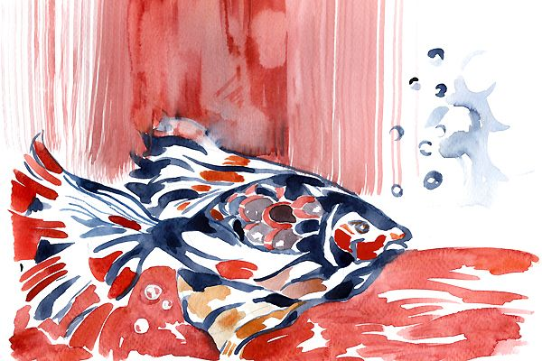 Red fish. Golden fish. Watercolor painting.