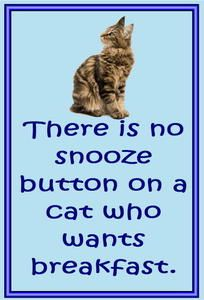 "There is no snooze button on a cat who wants breakfast.  Support ""Southern California Cat Adoption Tails"" www.catadoptiontails.com"