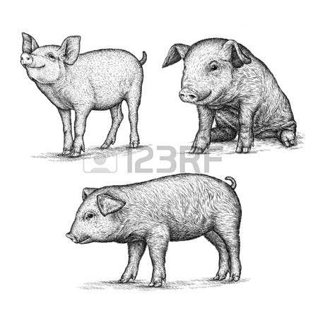 46499339-incidere-isolato-illustrazione-maiale-schizzo-arte-lineari.jpg (450×450)