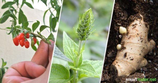 Diese exotichen Superfoods kannst du auch leicht selbst anbauen und ernten!