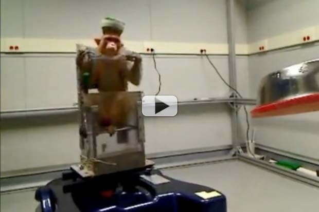 Brain Implants Help Monkey Drive Wheelchair With Mind | Video