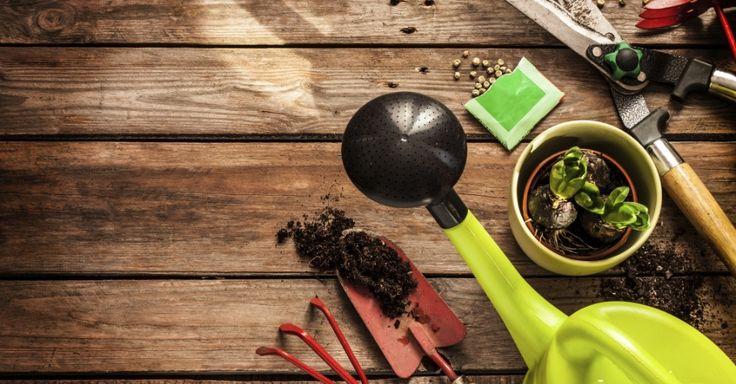 Amolar, limpar e guardar: aprenda a cuidar das ferramentas de jardinagem