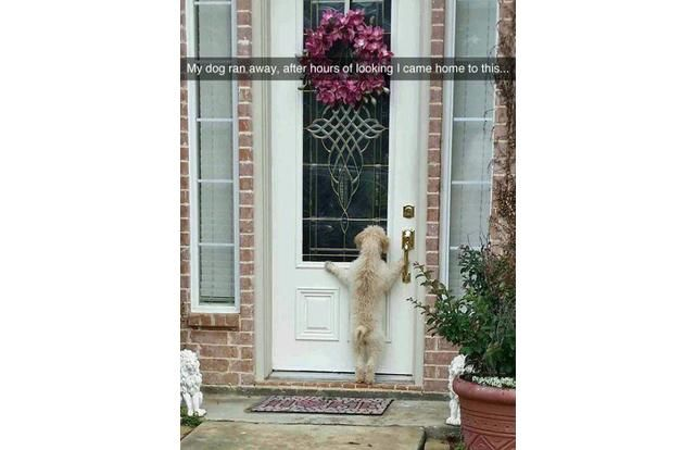 25 Hilarious Snapchats Anyone Who Loves Animals Must See (Slide #8) - Pawsome