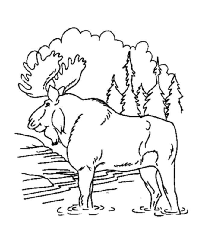 Bull Moose Animal Coloring Page